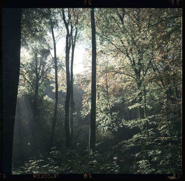 """""""Bois du parc – brume en contre-jour – Automne"""""""