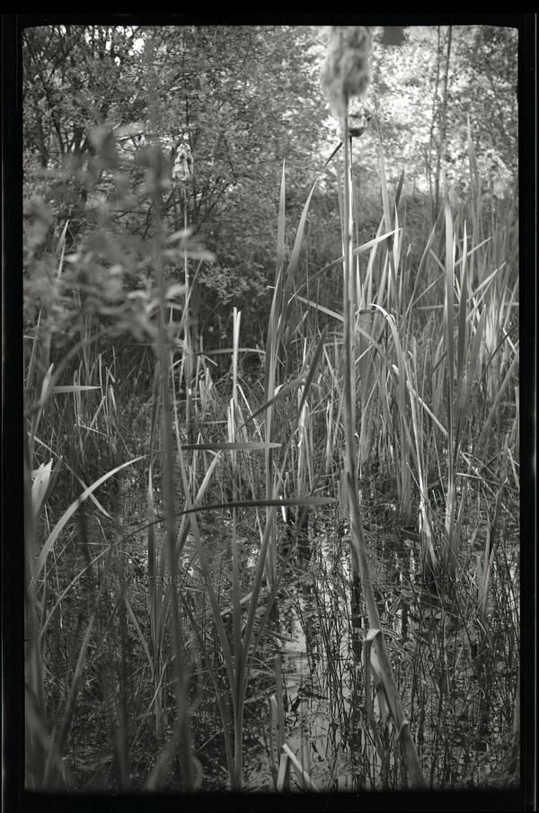 Roseaux et herbes hautes