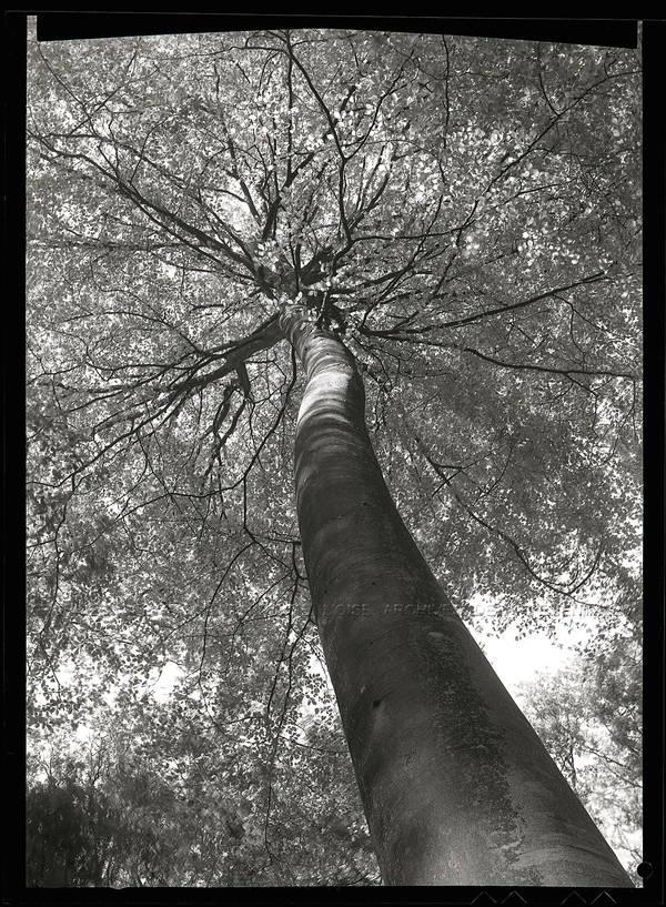 """""""Forêt du Theil"""""""